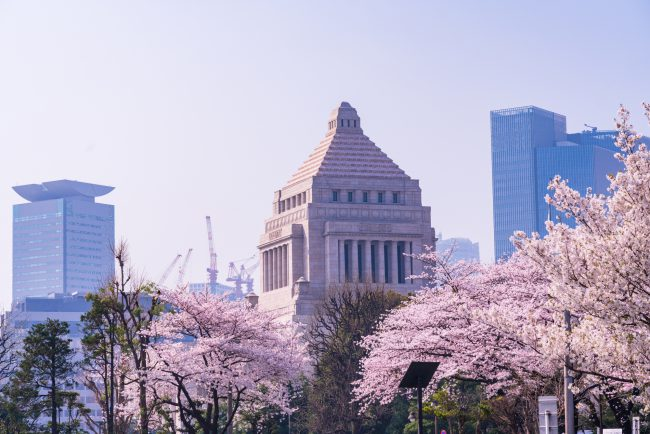 kokkai_sakura