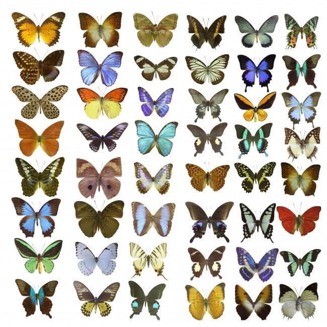 蝶と蛾は同じ?