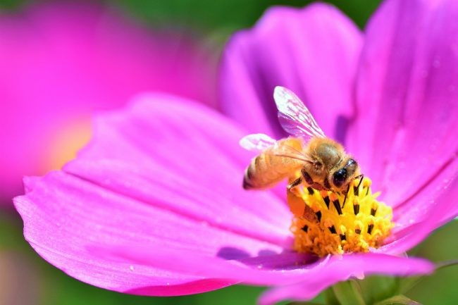 働き蜂と働き蟻