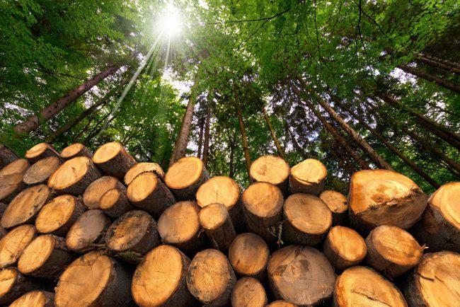 日本の林業は再生の余地あり